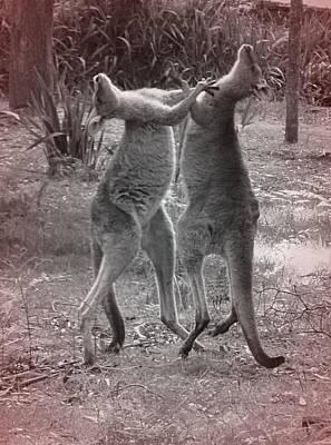 Kangaroo Print by Girish J