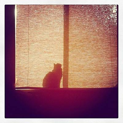 Cats Photograph - He Found The Light by April Moen