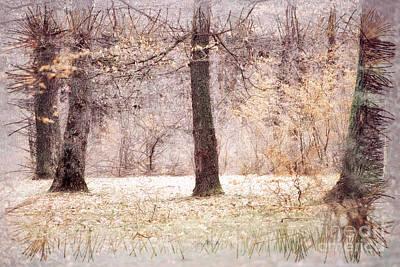 Forest Print by Odon Czintos