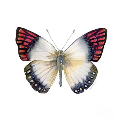 Striped Butterfly Painting - 27 Magenta Tip Butterfly by Amy Kirkpatrick