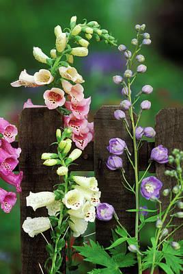 Foxglove Flowers Photograph - Usa, Pennsylvania by Jaynes Gallery