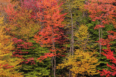 Buttermilk Photograph - Usa, New York, Adirondack Mountains by Jaynes Gallery
