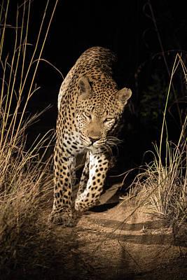 Africa, South Africa, Sabi Sabi Private Print by Jaynes Gallery