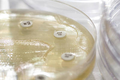 Disc Photograph - Antibiotic Sensitivity Testing by Daniela Beckmann