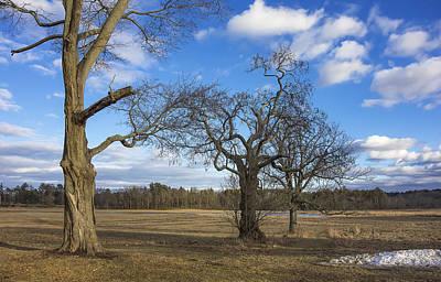 Appleton Photograph - 3 Appleton Trees by David Stone