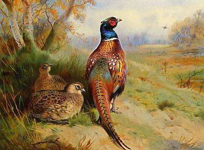 Farm Fields Painting - Pheasant At The Edge Of The Wood by Archibald Thorburn