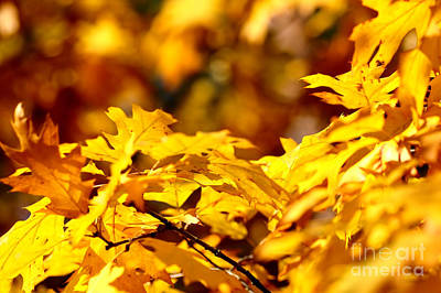 Green Photograph - Autumn Leaves by Michal Bednarek