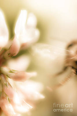 Bee Gone Print by Jorgo Photography - Wall Art Gallery