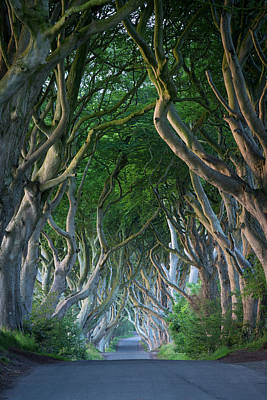 Beech Tree-lined Road Known As The Dark Print by Brian Jannsen