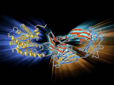 Molecular Structure Photograph - Beta-2 Adrenergic Receptor Molecule by Laguna Design