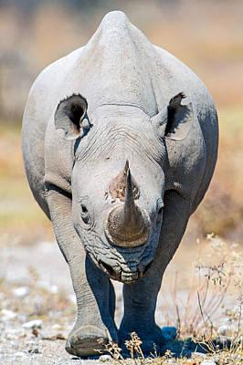 Rhinoceros Photograph - Black Rhinoceros Diceros Bicornis by Panoramic Images