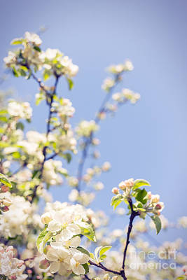 Blossoming Twigs Print by Aleksey Tugolukov