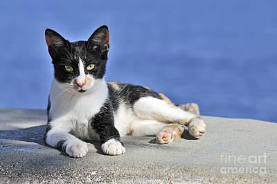 Cats Photograph - Cat In Hydra Island by George Atsametakis