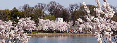 Cherry Blossoms Photograph - Cherry Blossom Trees Near Martin Luther by Panoramic Images