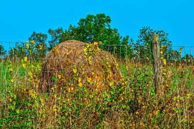 Country Fence Print by Brian Stevens