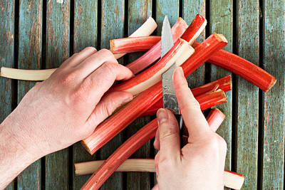 Cutting Rhubarb Print by Tom Gowanlock