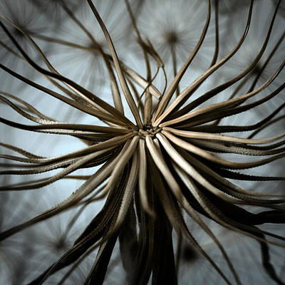 Flying Photograph - Dandelion by Stelios Kleanthous
