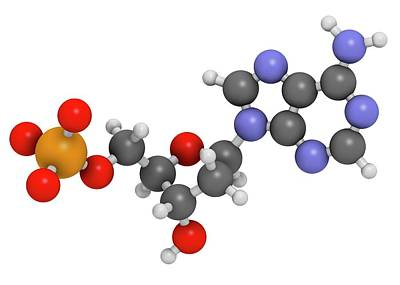 Deoxyribonucleic Acid Photograph - Deoxyadenosine Monophosphate Molecule by Molekuul