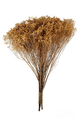 Dried Photograph - Dry Flowers Bunch by Olivier Le Queinec