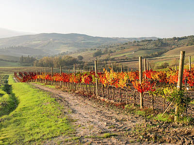 Viniculture Photograph - Europe, Italy, Tuscany by Julie Eggers