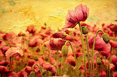 Flower Still Life Mixed Media - Field Of Poppies by Heike Hultsch