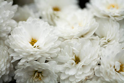 White Flowers Photograph - Flowers by Modern Art Prints