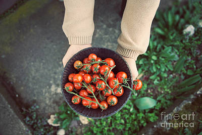 Tomato Photograph - Fresh Tomatoes by Mythja  Photography