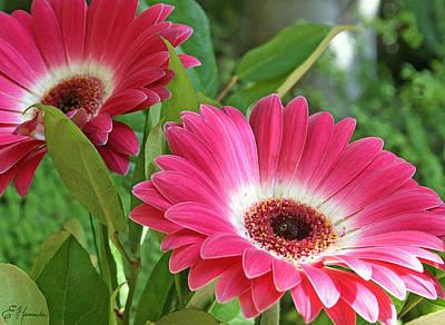 Gerber Daisy Painting - Gorgeous Gerbers by Ellen Henneke