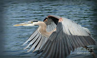 Blue Herron Photograph - Great Blue Herron by Warrena J Barnerd