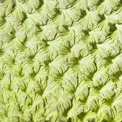 Lime Green Photograph - Green Fabric by Tom Gowanlock