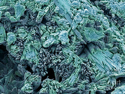 Plaster Of Paris Photograph - Gypsum Crystals, Sem by Steve Gschmeissner