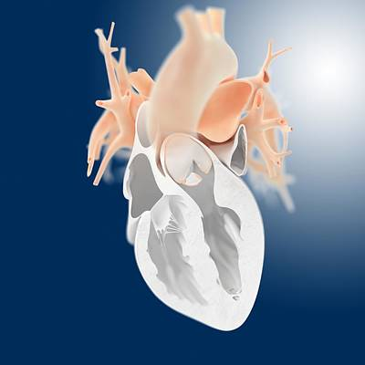 Heart, Artwork Print by Science Photo Library