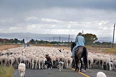 Luis Photograph - Herding Sheep by Jim West