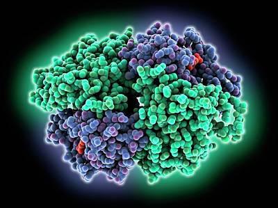 Salvage Photograph - Hgprtase Molecule by Laguna Design