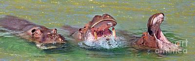 Hippopotamus Digital Art - 3 Hippos Having Fun  by Jim Fitzpatrick