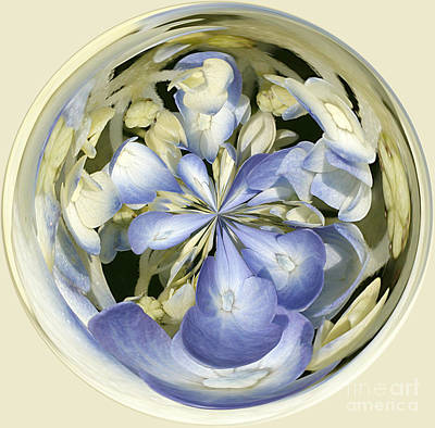 Hydrangea Print by Cindi Ressler