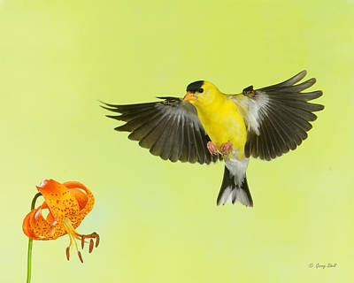 Incoming Print by Gerry Sibell