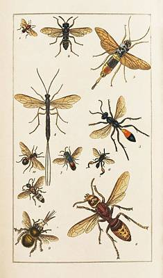 1819 Photograph - Insects by King's College London