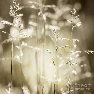 June Grass Flowering Print by Elena Elisseeva