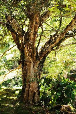 Jenny Rainbow Art Photograph - Kingdom Of The Trees. Peradeniya Botanical Garden. Sri Lanka by Jenny Rainbow