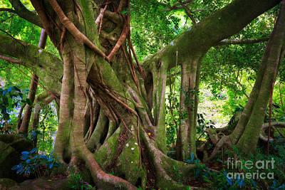 Botanic Photograph - Kipahulu Banyan Tree by Inge Johnsson