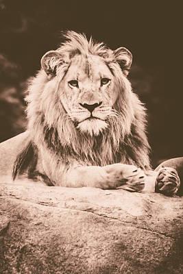 Lion Photograph - Lion King  by Sara Frank