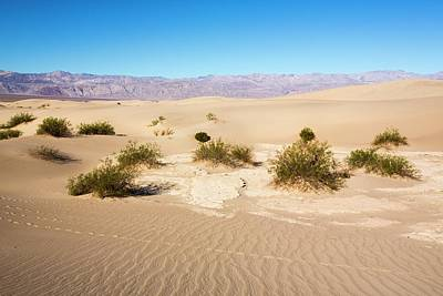 Mesquite Flat Sand Dunes Print by Ashley Cooper