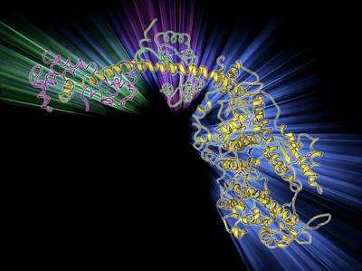 Molecular Model Photograph - Molecular Motor Protein by Laguna Design