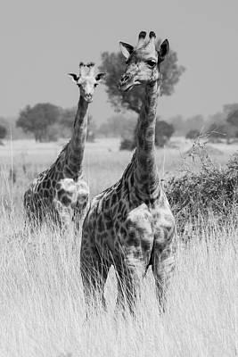 Janet Photograph - Okavango Delta, Botswana by Janet Muir