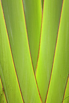 Palm Frond Pattern, Coral Coast, Viti Print by David Wall