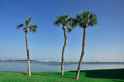 3 Palm Trees And The Sand Key Bridge Print by Bill Cannon