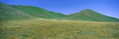 Panoramic View Of Spring Flowers Print by Panoramic Images