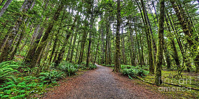 Forest Photograph - Path To Sol Duc Falls by Twenty Two North Photography