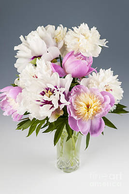 White Photograph - Peony Flower Bouquet by Elena Elisseeva